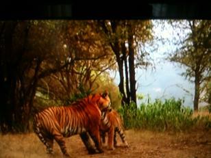 Historias de tigres y gacelas (5)
