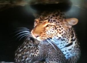 Historias de tigres y gacelas (4)