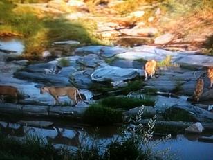 Historias de tigres y gacelas (y 8)